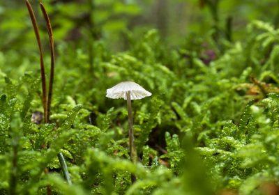 mushroom-2921176_640